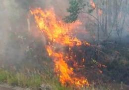 VÍDEO: Incêndio atinge matagal próximo ao Autódromo de Santa Cruz
