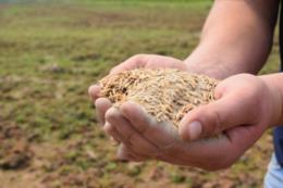 """""""Mesmo com essa alta do arroz, isso não vai pagar todas as nossas contas"""", aponta produtor"""
