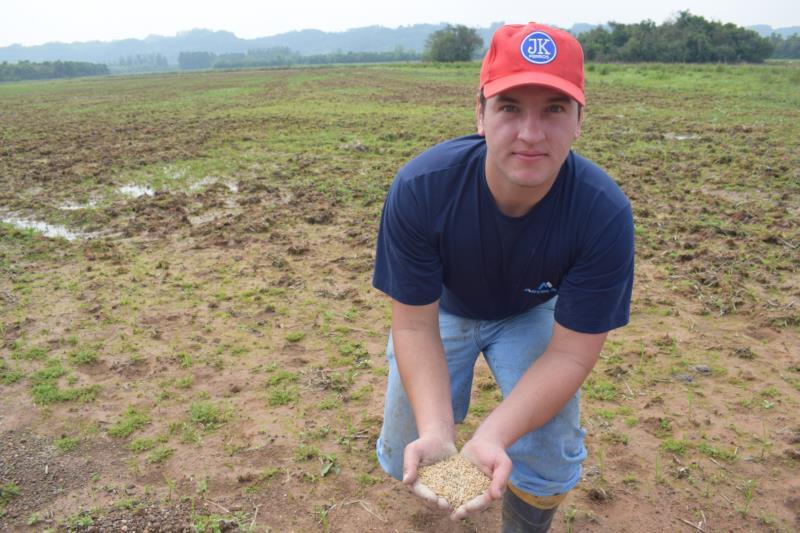 Christian auxilia a família na plantação de arroz em Linha Nova