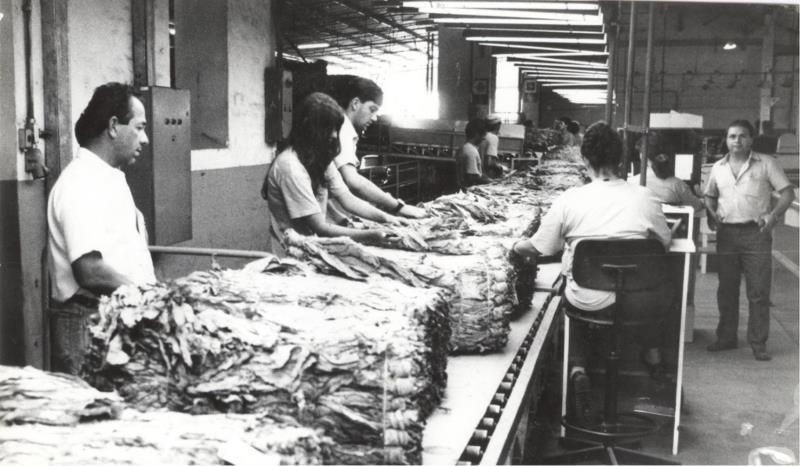 Registro do beneficiamento de tabaco em Santa Cruz do Sul