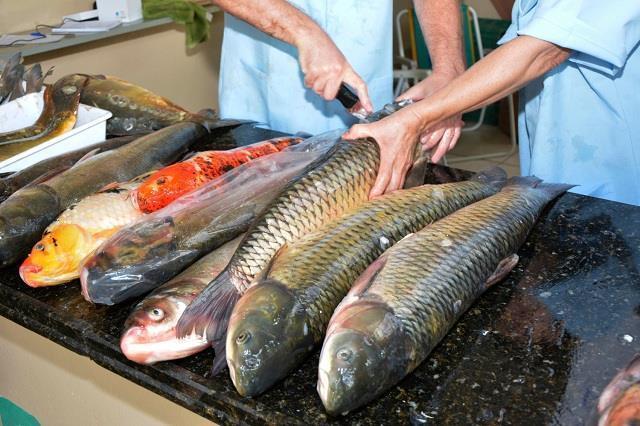 Serão ofertados pelos piscicultores do município diversos tipos de peixes e cortes