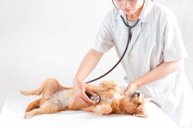 Instituição deu início a procedimentos particulares. Atendimento para animais de famílias carentes ainda não começou