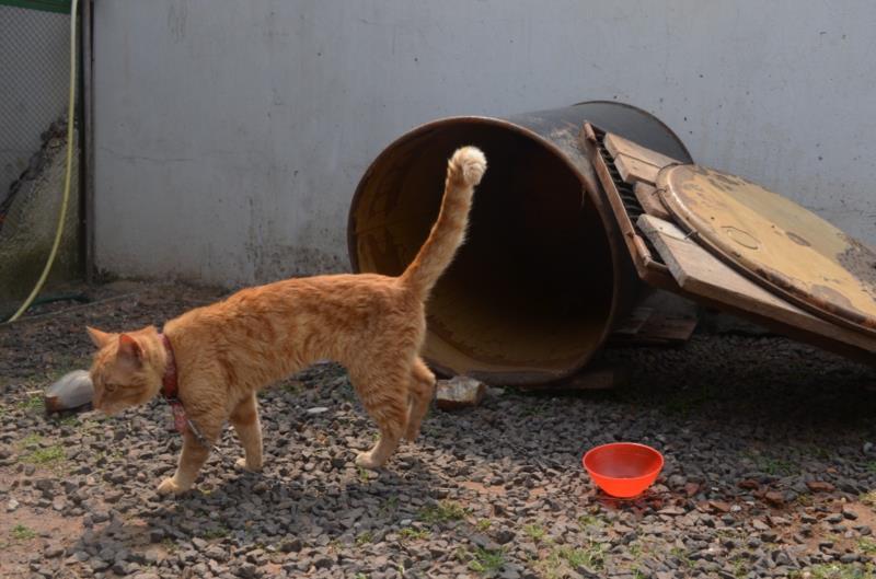 Gatos estavam acorrentados