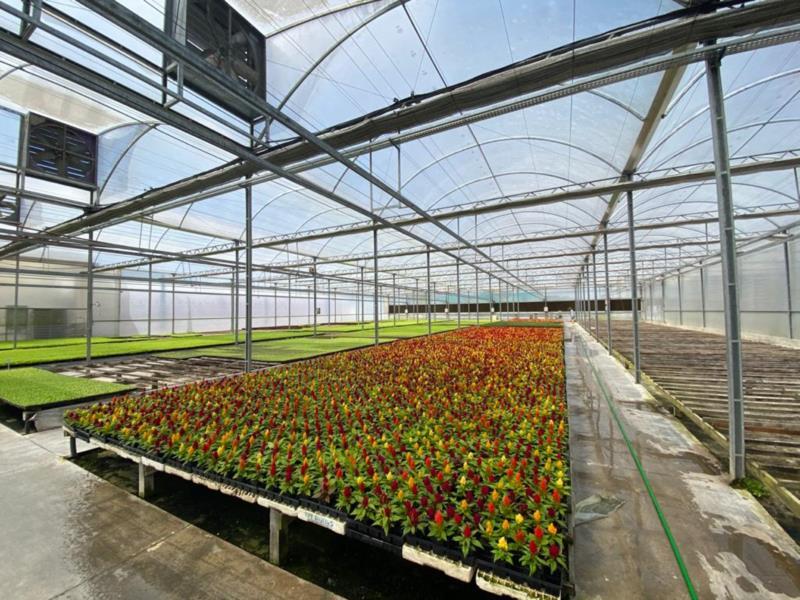 Além de mudas de hortaliças, viveiro também conta com diversas flores