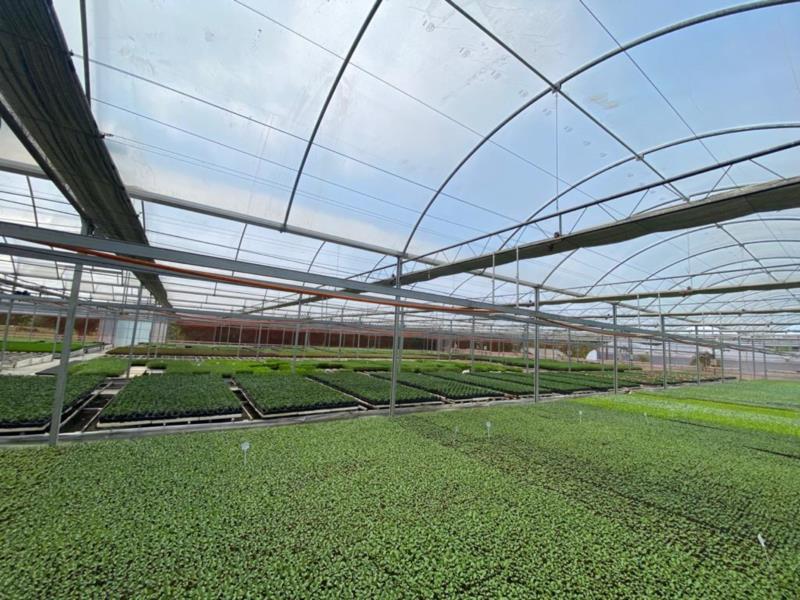 Em 2000, as primeiras bandejas foram semeadas