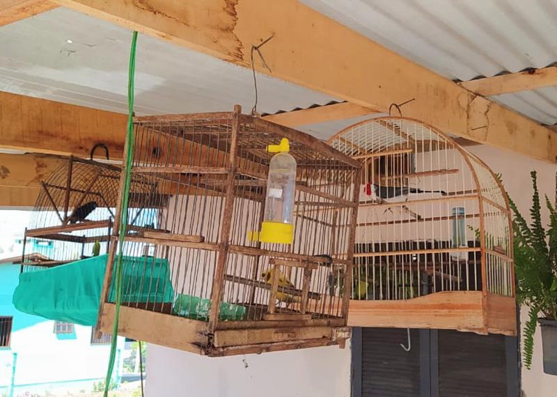 Animais foram recolhidos após denúncia anônima