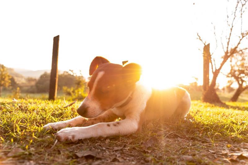 Cães também sofrem com o calor intenso do verão