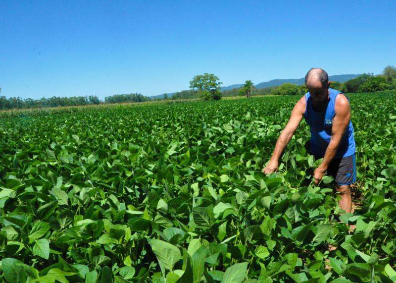 Na lavoura, cultivo de soja já sente os efeitos da seca