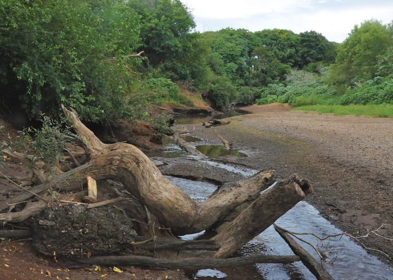Rio Pardinho já apresenta apenas filetes d'água em alguns pontos