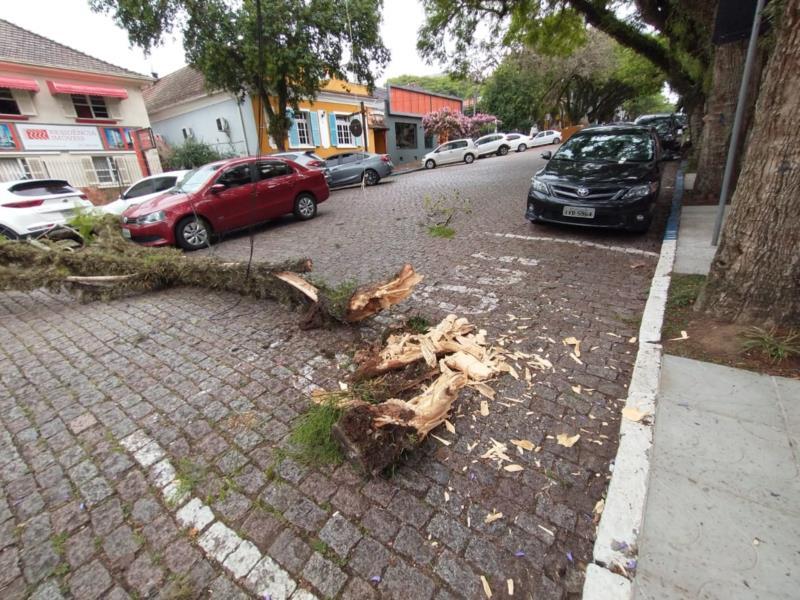 Galho de árvore quebra e por pouco não atinge carro em Santa Cruz