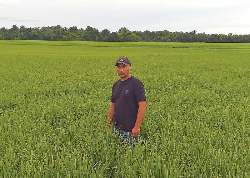 Márcio já vê melhora nos arrozais com as recentes chuvas