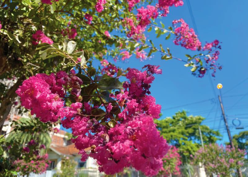 Extremosas dão um colorido a mais nas paisagens da cidade