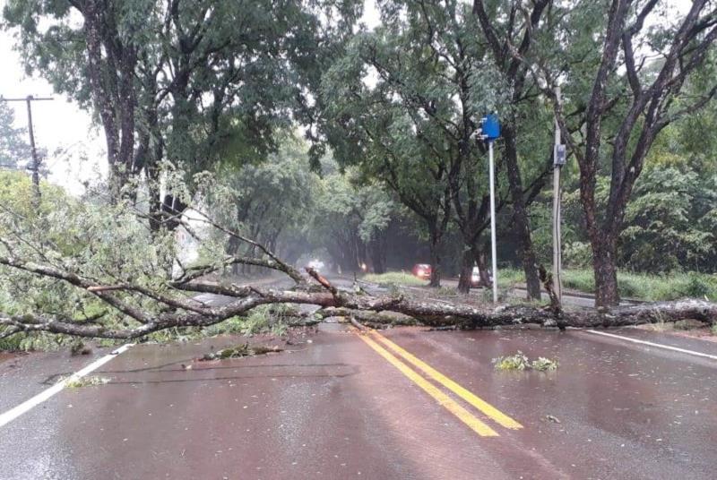 Queda de árvore bloqueou o trânsito na Ernesto Wild