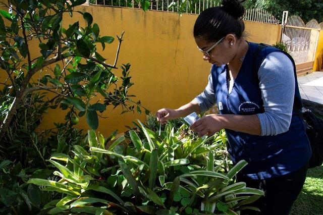 Prefeitura vai realizar mutirão para frear os casos de dengue