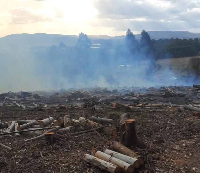 Incêndio atinge mata de eucalipto em Vale Verde