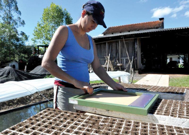 Em Linha Ferraz, Carla iniciou na última quarta-feira a semeadura em sua propriedade