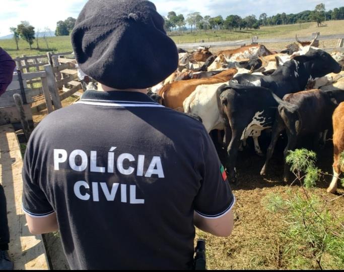 Foram apreendidos 95 animais bovinos sem procedência e em área irregular e 8 animais furtados pertencentes a três vítimas