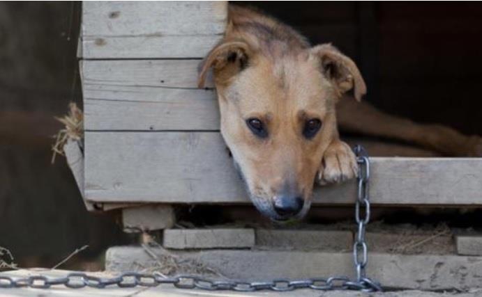 De autoria da vereadora Bruna Molz, substitutivo e emenda alteram a lei que dispõe sobre o bem-estar animal