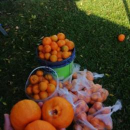 Alunos penduram sacolas com frutas em frente à escolinha para incentivar doação em Santa Cruz