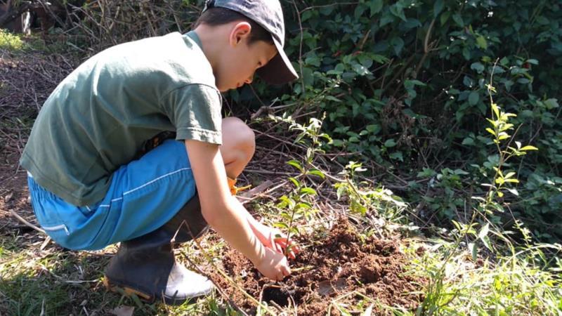 Vinícius recebeu da escola uma muda de árvore nativa para realizar o plantio em casa