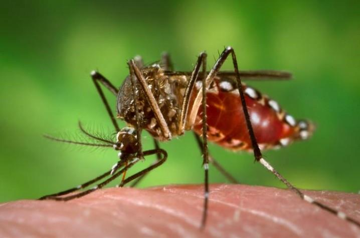 A taxa de letalidade aparente da doença no município de Santa Cruz do Sul é de 300 a cada 100 mil casos