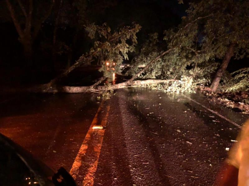 Árvore caiu na rua Ernesto Wild, em Vera Cruz