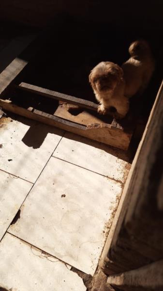 Polícia Civil resgata mais de 10 cães em situação de maus-tratos em Vera Cruz