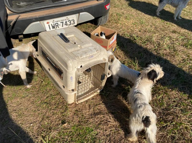 Oito cães e um gato foram recolhidos