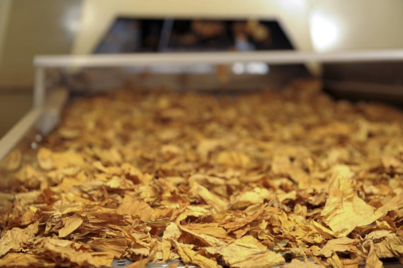 Com exceção de Tabaco (-8,6%), todos os grandes exportadores avançaram em junho