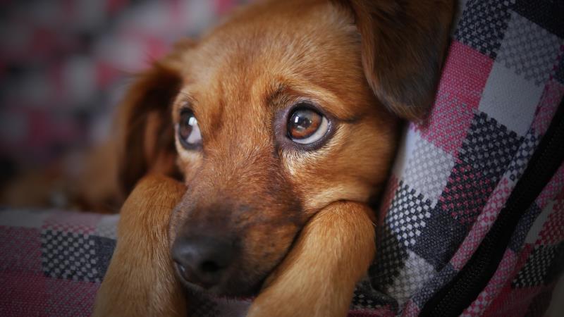 Agressores de animais podem ser obrigados a pagar pelo tratamento dos bichos em Venâncio Aires