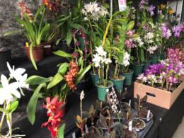 FOTOS: Santa Cruz recebe Exposição Regional de Orquídeas no Parque da Oktoberfest