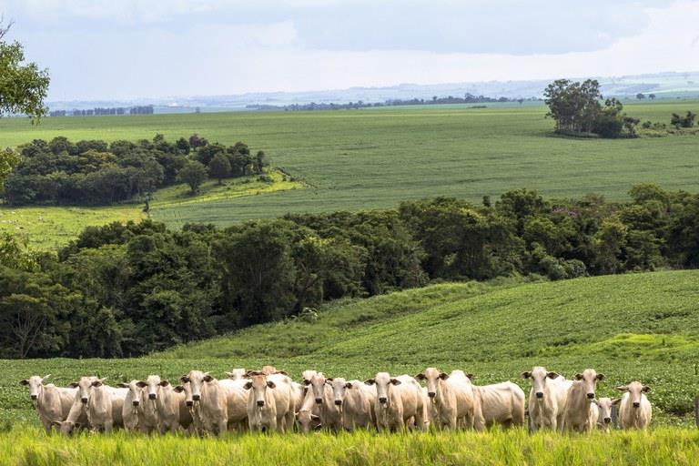 Puxadas pela Agropecuária, taxas do Estado superam o desempenho registrado no país