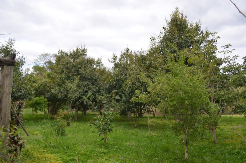 Local conta com diversas árvores frutíferas