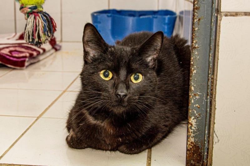 Gatos também estão disponíveis para adoção