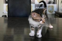 Homem adotava gatos pela internet para depois matar os animais no noroeste do RS